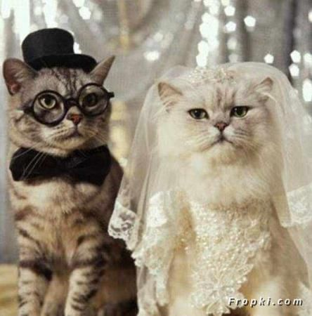 Cat Marriage