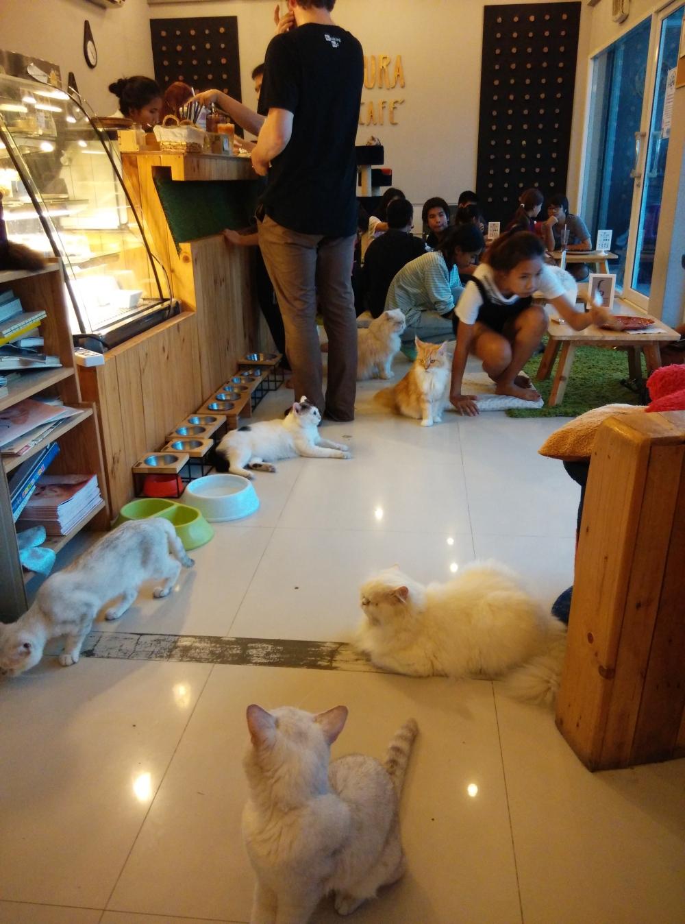 Makura Cat Cafe Bangkok