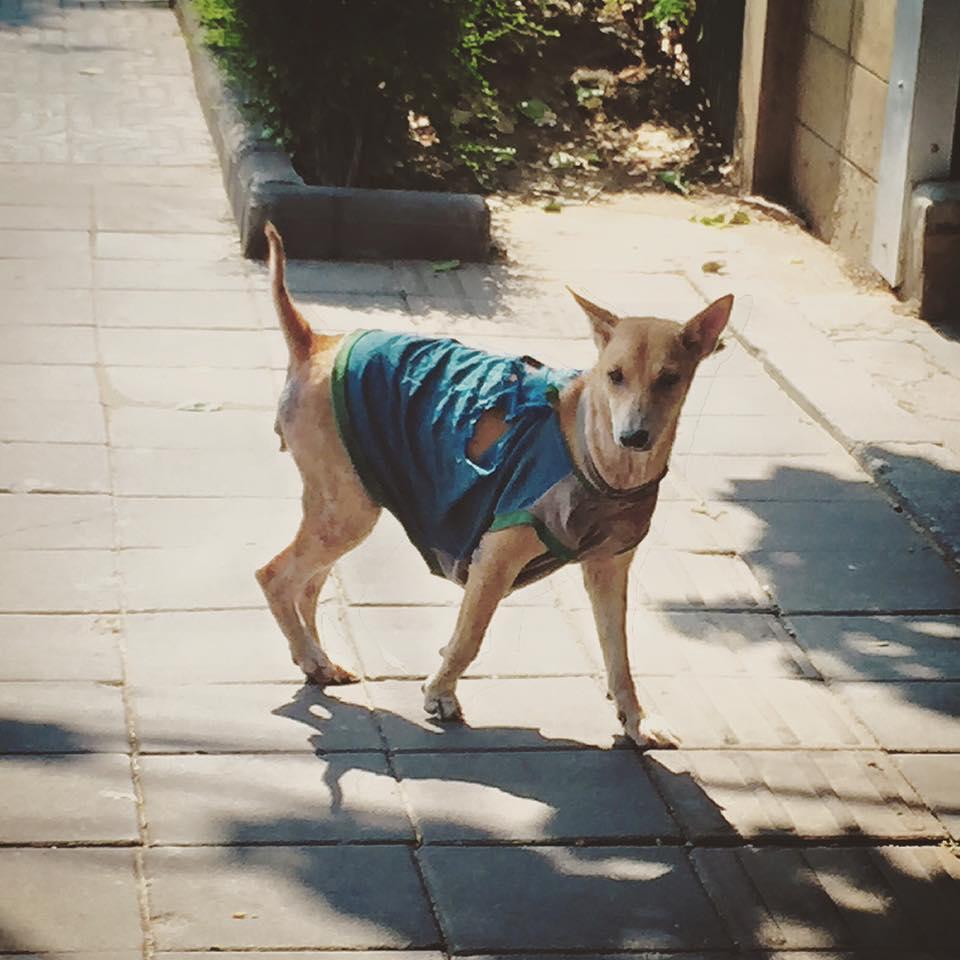 Street Dog in Thailand